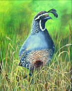 On the Lookout (California Quail)